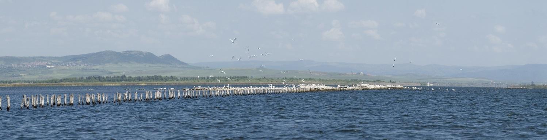 Поморийското езеро – домът на птиците